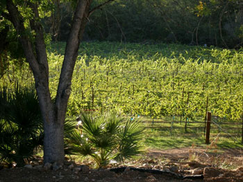 Page Spring Wineries and Vineyards - Real estate in rural Arizona